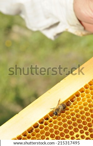 bee keeper and product of honey - stock photo