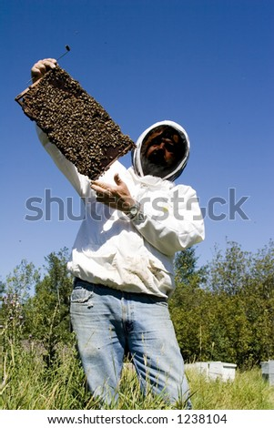 Bee keeper with bees - stock photo