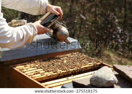 bee keeper with smoker in hand works on bee hive - stock photo