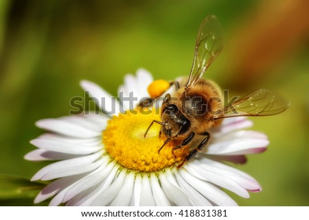 Bee on a flower collecting pollen and nectar
