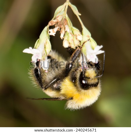 bee on a flower in nature - stock photo