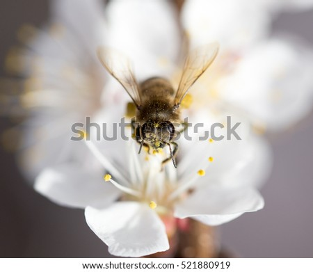 bee on a flower in the nature. macro
