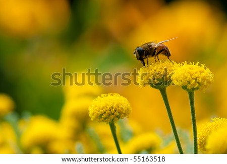 Bee on a little flower - stock photo