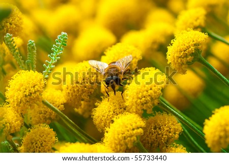 Bee on a little yellow flower - stock photo