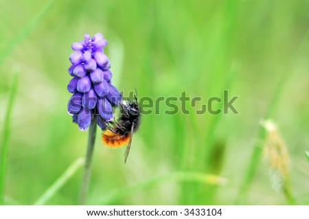 bee on a purple flower - stock photo
