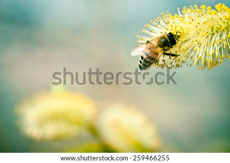 Bee on a yellow flower in spring - stock photo