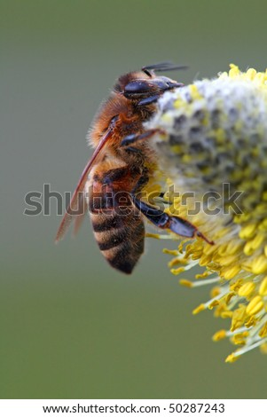 Bee on a yellow planet - stock photo