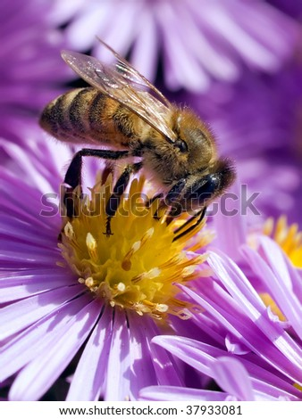 Bee on flower. - stock photo