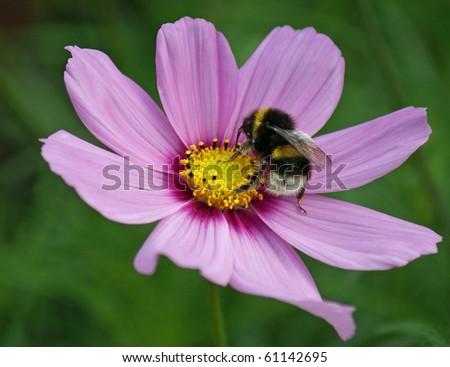 bee on flower - stock photo
