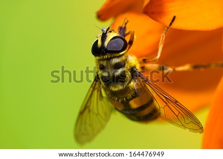 Bee on flower field at summer day - stock photo