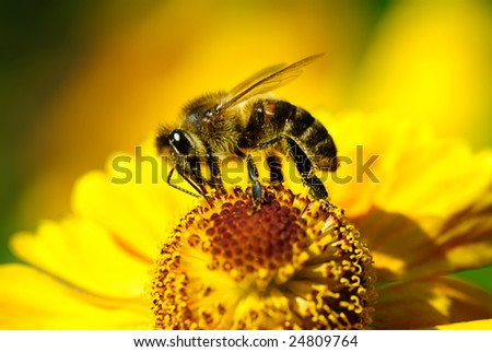 bee on flower in garden - stock photo