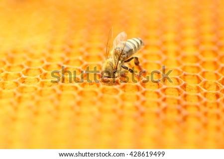 Bee on honeycomb - stock photo
