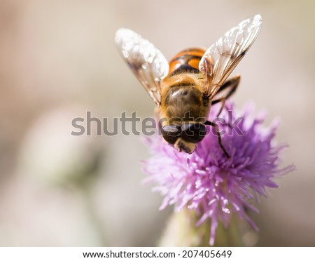 bee on nature. macro