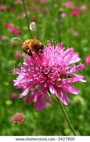 Bee on Pink Flower - stock photo