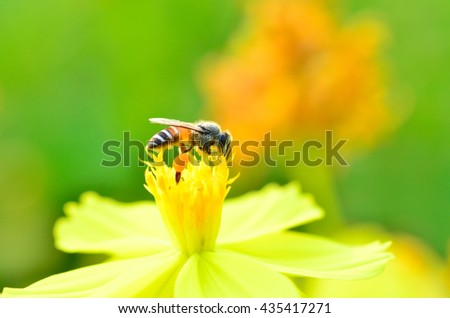 Bee on the flower.