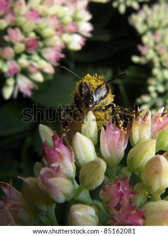 Bee on the flower - stock photo