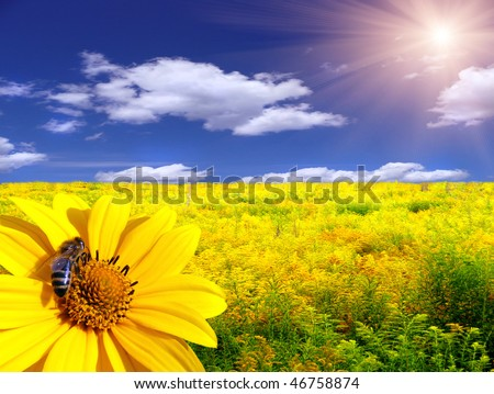 Bee on the flower in the yellow meadow - stock photo