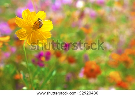 Bee on the yellow flower in the colorful flora garden - stock photo