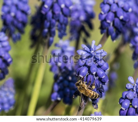 Bee on violet flower - stock photo