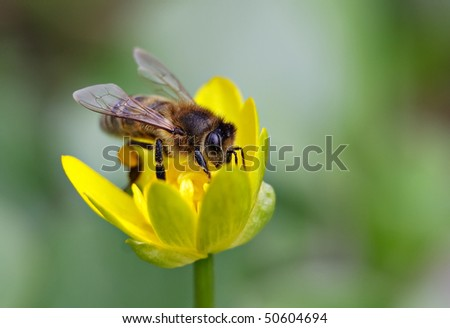 Bee on yellow flower.