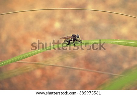 Bee Perched  on Curved Leaf - stock photo