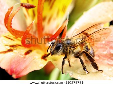 Bee Pollinating a Brightly Coloured Flower - stock photo