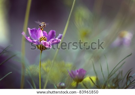 Bee returning to the hive - stock photo
