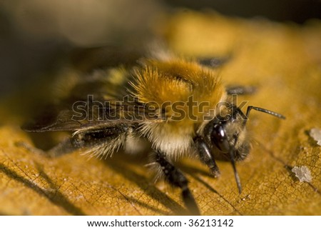 Bee. Selective focus, shallow depth of field. - stock photo
