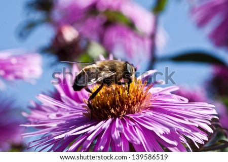 bee sitting on a flower