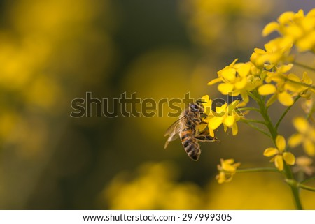 Bee sitting on a yellow flower.