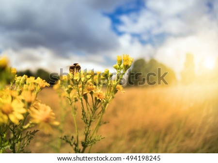 Bee sitting on flower in sunny field