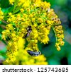 Bee sitting on yellow wildflower. Close-up. - stock photo