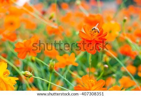 bee suck soft drink from orange flower - stock photo