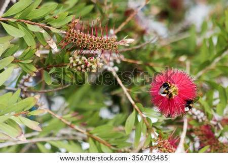 Bee sucking nectar from a flower - stock photo