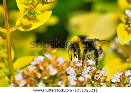 bee taking nectar from flower