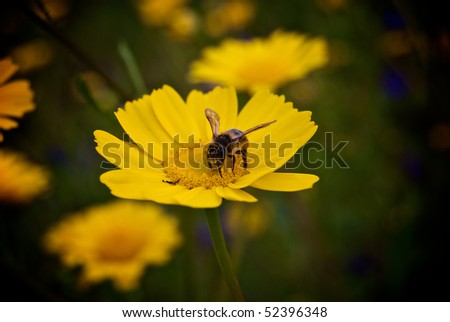 Bee upon a flower - stock photo