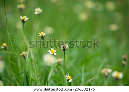 Bee worker collecting pollen from grass flower. - stock photo