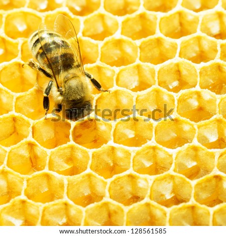 bee works on honeycomb. Honey cells pattern.