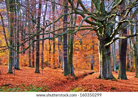 Beech and oak trees in the autumn forest lit by afternoon sunshine. Czech republic, Europe. - stock photo