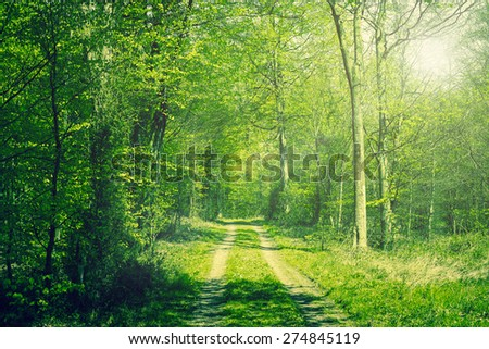 Beech forest in the springtime with sunshine - stock photo