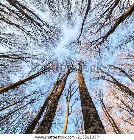 Beech forest on the sky background