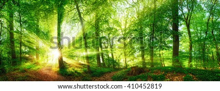 Beech forest panorama and the sun, with bright rays of light beautifully shining through the trees - stock photo