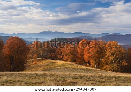 Beech forest with orange leaves. Autumn landscape on a sunny day in the mountains. Carpathians, Ukraine, Europe - stock photo