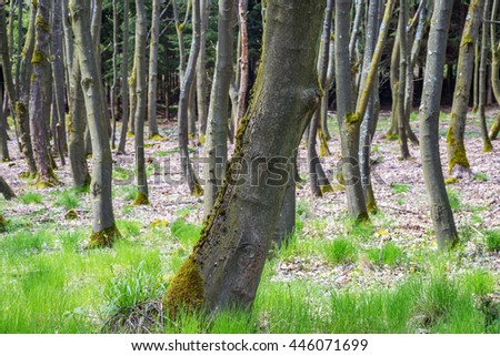 Beech oak trunk bark tree forest woods park nature landscape scenery background texture - stock photo