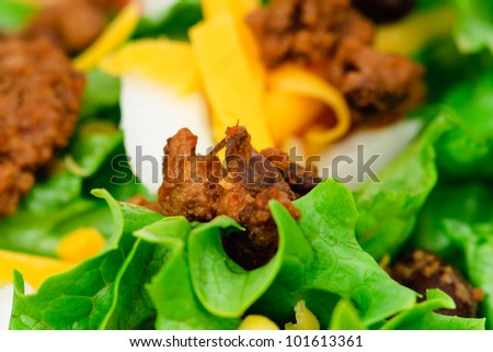 Beef and bean burrito with cheddar cheese salsa guacamole taco salad and beer - stock photo