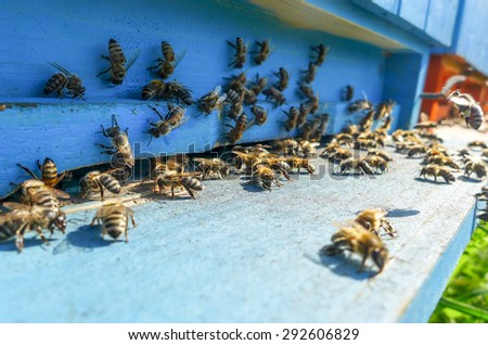 Beehive - stock photo