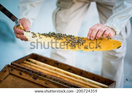 beehive beekeeper inspects - stock photo