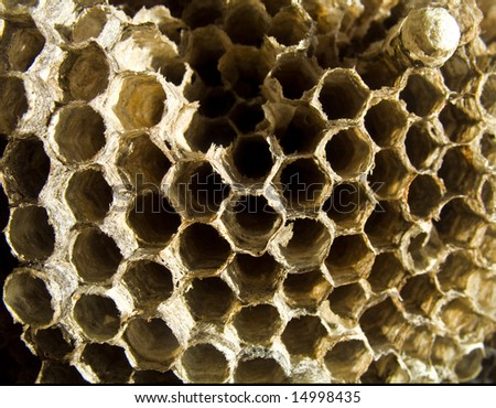 Beehive close up - stock photo
