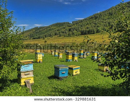 beehives are exposed on a green glade in mountains in the summer