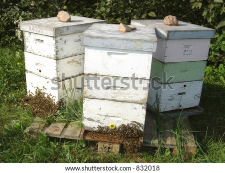 Beehives on the Farm